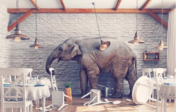elephant-chaos